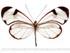 Sensory Ecology of Ithomiine Butterflies
